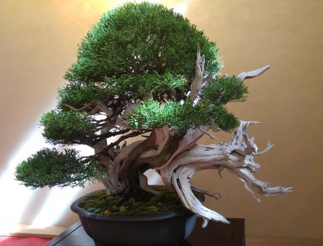 Use On Bonsai Bonjinsan